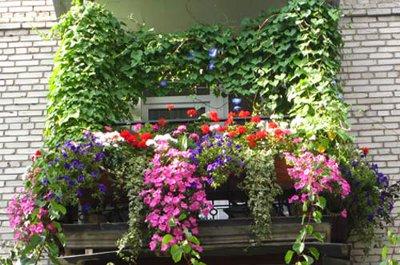 Росту и цветению растений но обычно